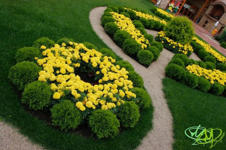 Заметки для цветоводов, фото цветов.