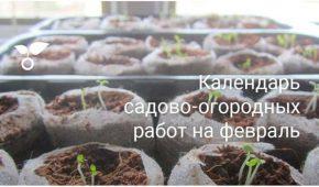 Миниатюра к статье Сад и огород в феврале – важные работы в календаре