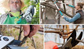 Миниатюра к статье Календарь обрезки плодовых деревьев 2019 — Когда обрезать фруктовые деревья и кустарники?